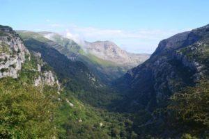 Plantaciones y movimientos de tierra en Cantabria