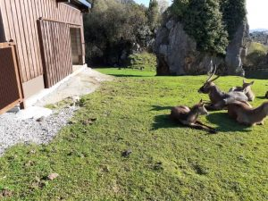 Renovación integral y construcción de patios de reserva en recintos de animales en el Parque de la Naturaleza de Cabárceno