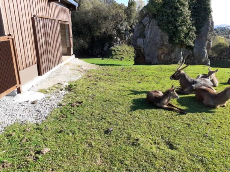 Renovacion Y Construccion De Instalaciones Para Animales En Parque De Cabarceno (2) cantabria